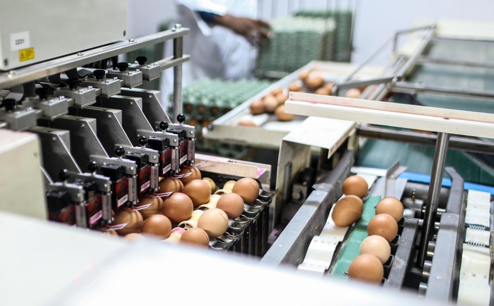 Αγρόκτημα Μουστάκα, Συσκευαστήριο