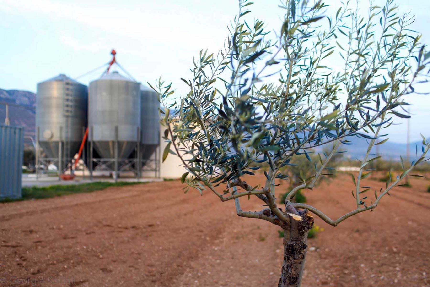 Αγρόκτημα Μουστάκα